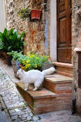 Fototapete - Italian old house and cat
