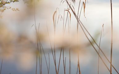 Obraz lato woda jezioro tło - fototapety do salonu