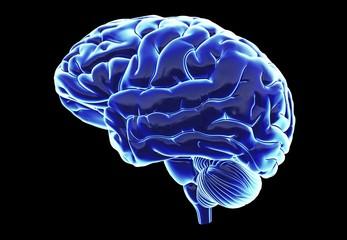 Gehirn - detailreich -