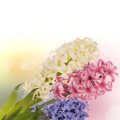 Beautiful spring flower. Celebration card