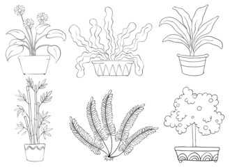 Silhouettes of different shrubs