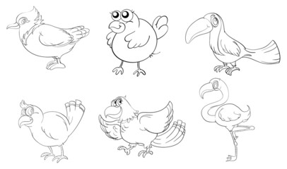 Different birds in doodle design