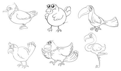 Different birds in doodle design