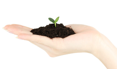 Green seedling growing from soil.in hand