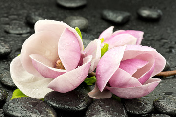 Obraz Magnolie z kamieniami do spa - fototapety do salonu
