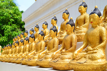 lots of golden buddha images