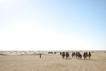 Group of tourists on camels