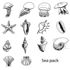 Collection of sea animals and shells