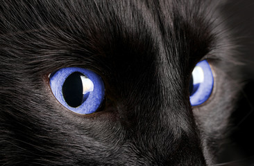 Black cat on black background