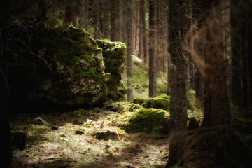 Beautiful woods photo in Tatry