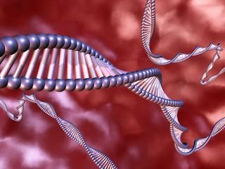 DNA im Körper