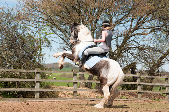 Misbehaving horse