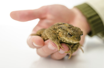 Male hand holding a frog