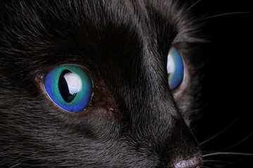 Black cat, close-up