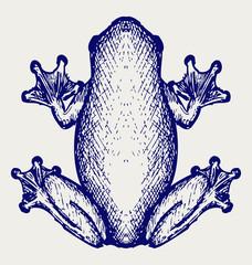 Frog sketch. Doodle style