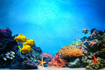 Underwater scene. Coral reef, fish groups in clear ocean water