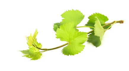 Fresh leaves of grape on white background