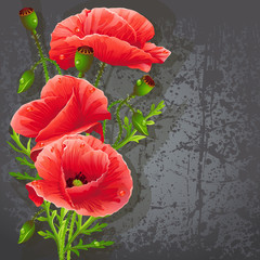 Background for your text with red poppies.