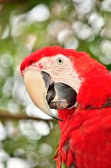 Bokeh Macaw