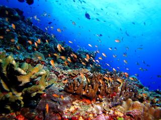 珊瑚礁の水中風景