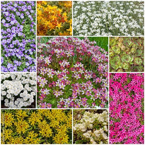 sedum, fetthenne, steingarten, dickblattgewächs, crassulaceae, Garten Ideen