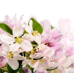 Apfelblüten und Japanische Kirschblüten