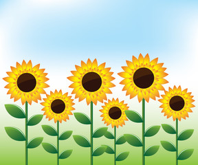 Sunflowers landscape background
