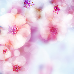 pink spring flowers  and bokeh