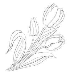 Hand drawn tulips.
