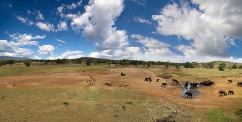Safari Paradiso