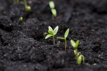 Small Plants (Macro)