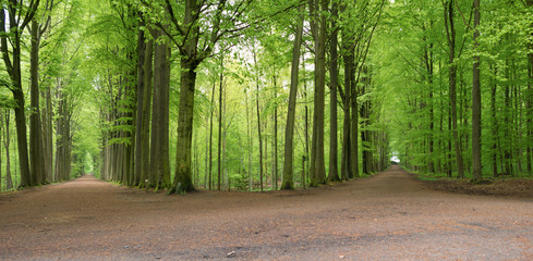 Path through a beech forest in spring