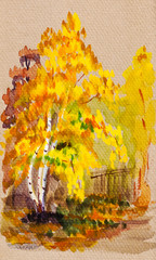 autumn view with yellow leaves birch