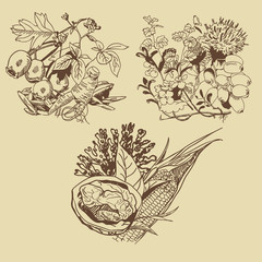 art sketching set of vector leaves symbols elements