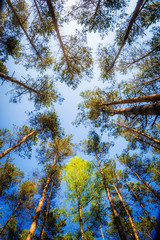 Tuinposter Aan het plafond Awesome beech forest seen from below