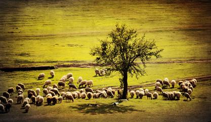pastoral vintage landscape