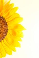 half sunflower