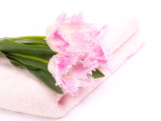Towel and tulips on white background