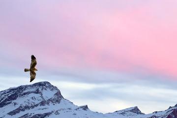Een visarend van de vlieger op de roze hemelachtergrond van de zonsondergangberg