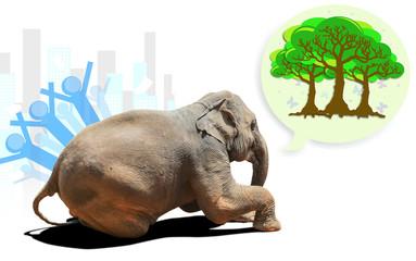 sad elephant calf