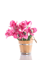Pink tulips in a wooden bucket