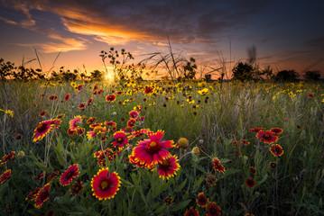 Aluminium Prints Texas Texas Wildflowers at Sunrise