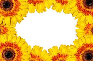 Frame of flowers gerbera