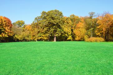 Fototapeta Field of grass - Autumn forest obraz