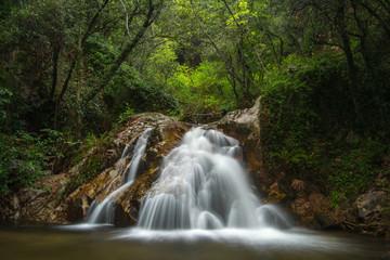 Cascada en el bosque verde