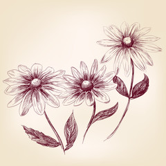 Beautiful Flower daisies  vector illustration