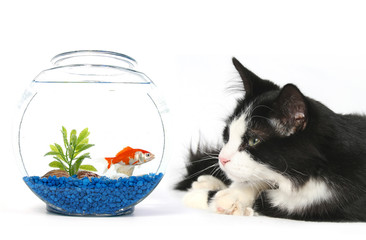 curious cat with a fish