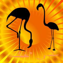 flamingo on orange background vector illustration