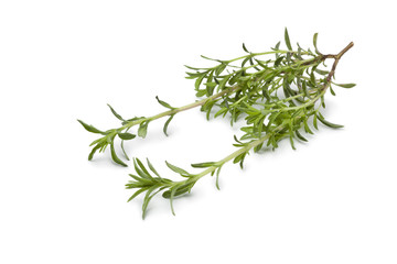 Fresh twig of Winter savory