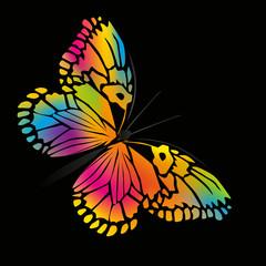 Papillon_Couleurs